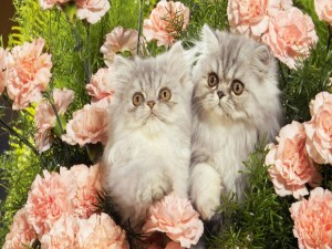 Dos gatos entre rosas