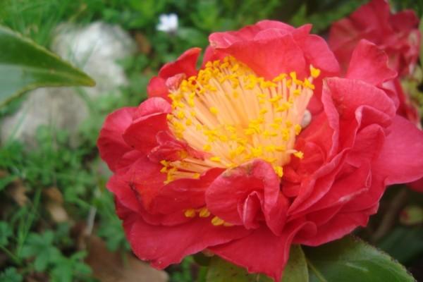 Flor roja y amarilla
