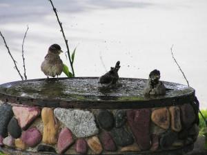 Pájaros dándose un baño