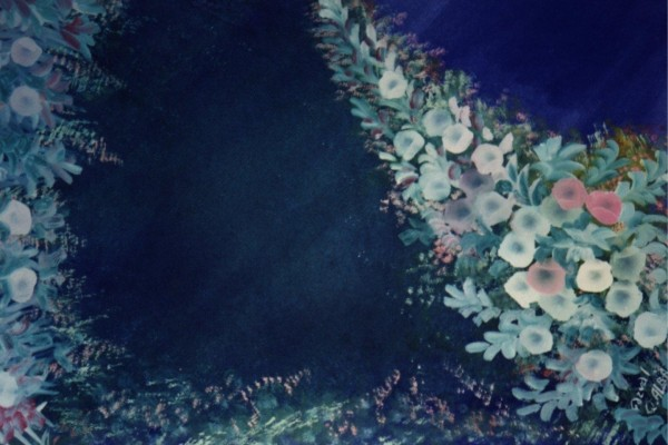 Flores tenues