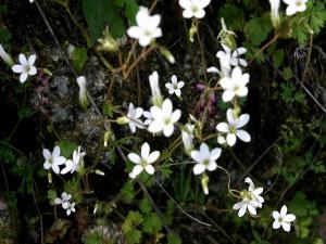 Pequeñas flores blancas
