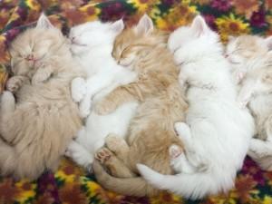 Gatitos durmiendo muy juntos