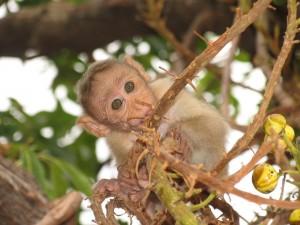 Pequeño mono en lo alto de un árbol