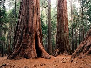 Grandes troncos de árboles