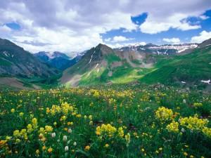 Flores silvestres a los pies de las montañas