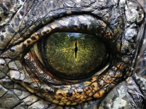 El ojo de un dinosaurio