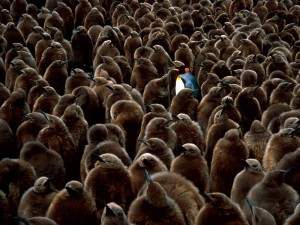 Postal: Un pingüino diferente