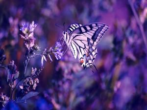 Postal: Mariposa en púrpuras