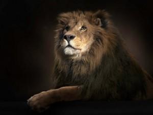 Postal: El rey de la selva