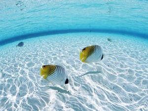 Peces tropicales en aguas transparentes