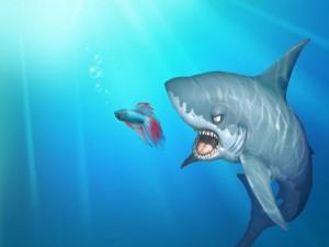 Postal: Tiburón atacando a un pez betta