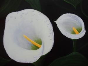Pintura de dos calas con gotas de rocío
