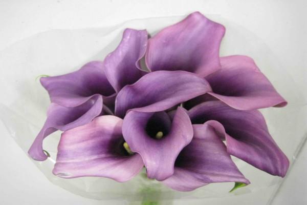 Calas de color lila