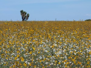 Postal: Campo lleno de flores silvestres
