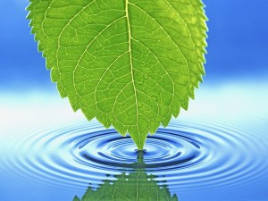 Postal: Hoja verde tocando el agua