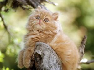 Gato posando en un tronco