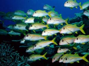 Banco de pequeños peces
