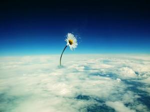 Postal: Margarita naciendo de las nubes