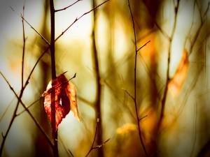 Postal: Una solitaria hoja entre las ramas