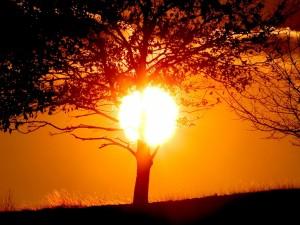 El círculo del sol tras un árbol