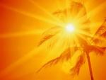 El sol detrás de una palmera