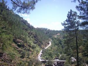 Postal: Bosque en la Montaña Gerês, Portugal