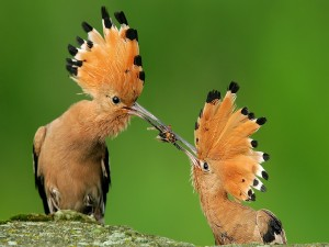 Dos aves peleando por la comida