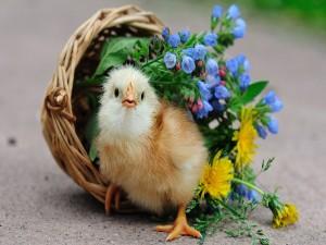 Postal: Polluelo en un nido con flores
