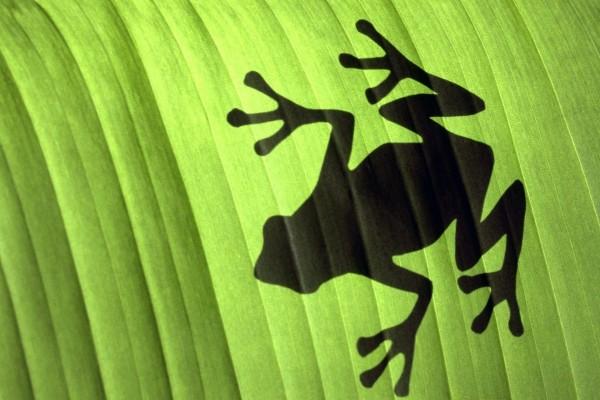 La sombra de una rana