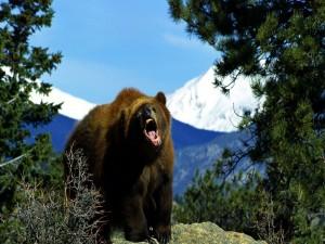 Postal: Gran oso enfadado