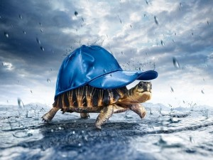 Postal: Cubriéndose de la lluvia