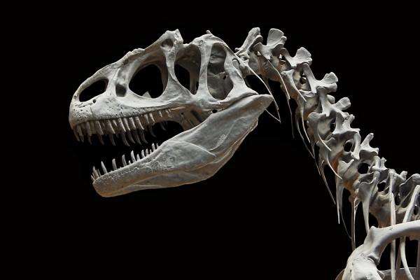 Esqueleto de un dinosaurio