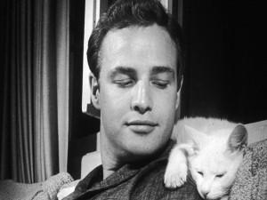 Marlon Brando con un gatito blanco