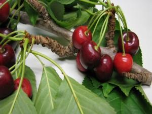 Postal: Rama de cerezas