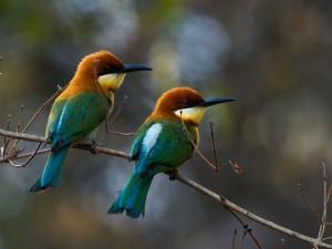 Postal: Pájaros sobre una rama
