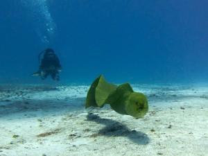 Un buzo en el fondo del mar
