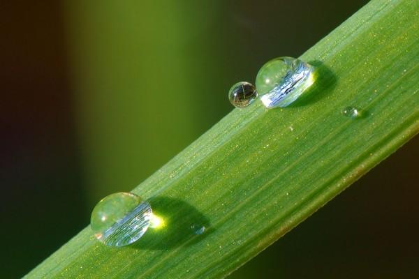 Dos gotas de rocío sobre una brizna de hierba