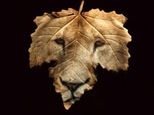 Postal: Hoja con la cara de un león