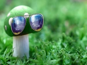 Postal: Seta con gafas de sol