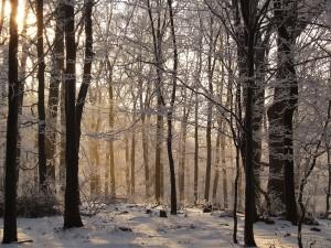 Bosque en la montaña Mátra, Hungría