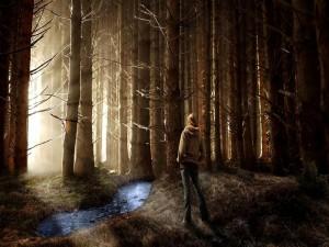Postal: Extraño bosque