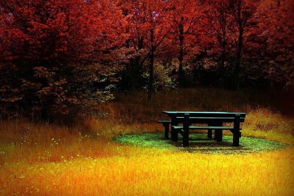 Mesa de madera en un paraje colorido