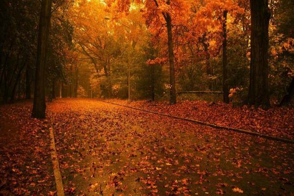Paisaje rojizo en otoño