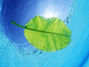 Postal: Hoja verde en el agua