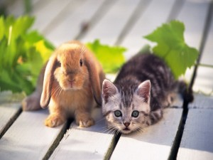 Postal: Un conejo y un gatito