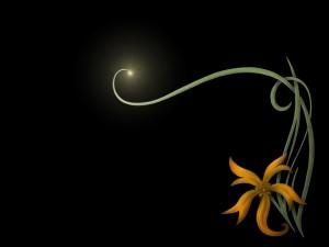 Postal: Flor luminosa