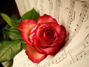 Postal: Rosa sobre una partitura