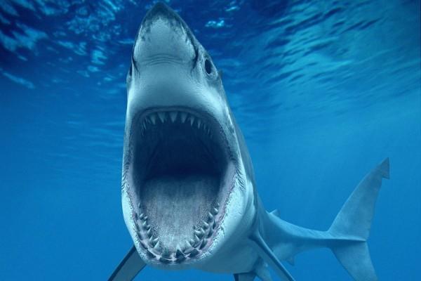 La boca del tiburón