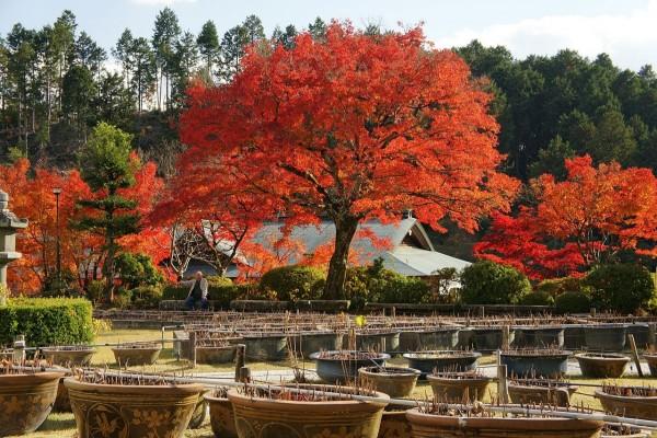 Mimuroto-ji en Uji, prefectura de Kyoto, Japón