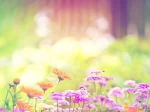 Postal: Flores en colores pastel